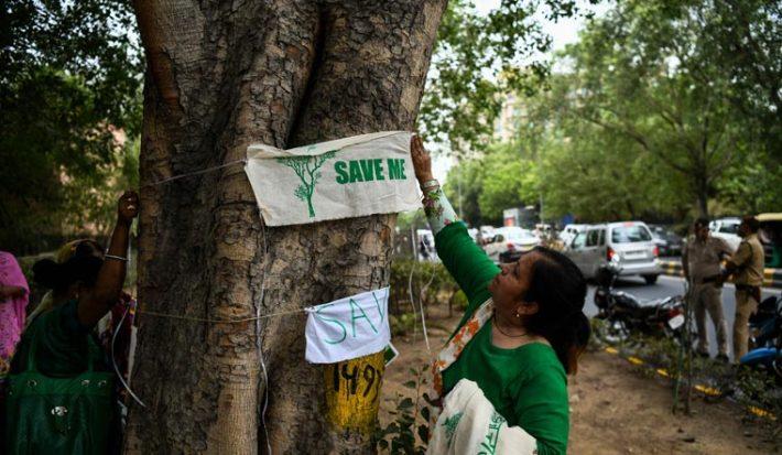 india tree protest